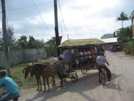 carts for transport, Pinar Del Rio province